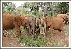 Mbegu, Karisa, Tagwa und Rapa