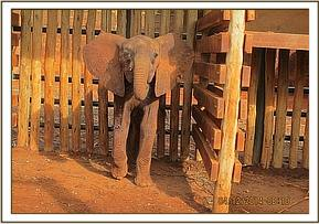 Ndoria in the stockade a day after her rescue