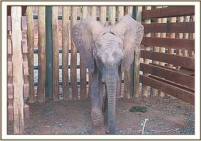 Ndoria a few days after her rescue