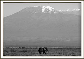 Amboseli, in the shadow of Kilimanjaro