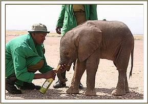 Kibo and the Keepers at Amboseli.jpg