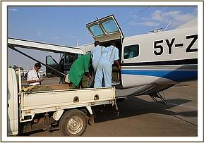 Offloading the calf at Wilson Airport