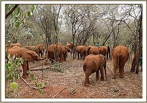 Alamaya in the forest with the other orphans