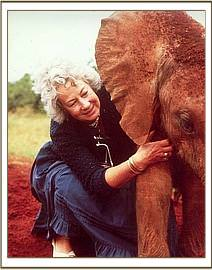 Dr. Daphne Sheldrick giving Dika his daily mudbath