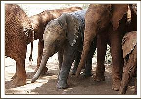 Little Kenia engulfed by the other Nursery orphans on her first day with them