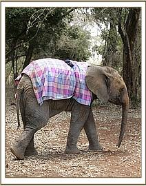 Kenia explores her new surroundings on her second day at the DSWT Nusery