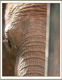 Siria, a vulnerable little elephant who craves the company of others, both human, rhino is Maxwell and the other orphans.