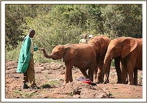 Siria was quick to grow close to his Keepers and the other bigger orphans were quick to 'pocess' him.
