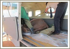 securing the orphan in the plane