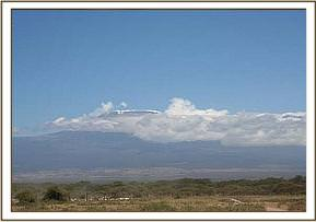 Kili with Masai cattle in the foreground