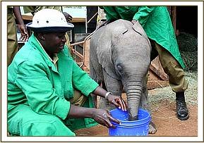 Kimana enjoys the bucket of water.jpg