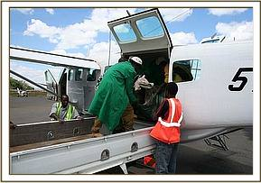 The tiny calf is off loaded into the Trust's pickup at Wilson airport Nairobi.jpg