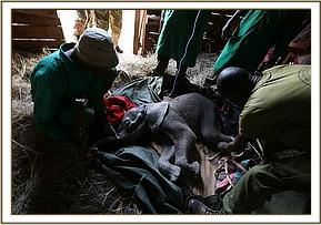 Erste Hilfe für das leblose Waisenbaby