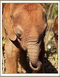 Wunderbarer Musiara