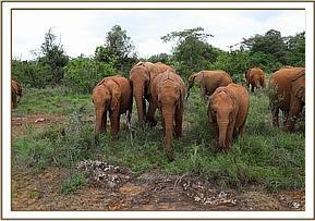 Jotto, Ukame, Ndiwa und Malima