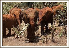 Ndiwa wird von Rapa begrüßt
