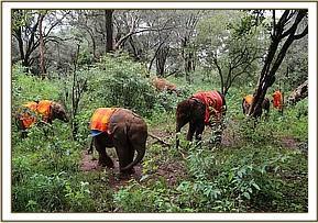 Tagwa mit den anderen Waisen im Wald