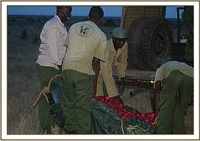 Loading Sattao into the vehicle