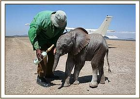 The Keepers give the orphan milk on the airstrip