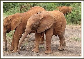 Mbegu und Rapa
