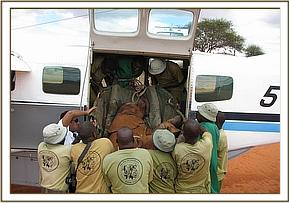 The DSWT rescue team lift the orphan into the rescue plane