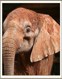 Melia, a feisty elephant upon arrival
