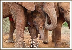 Ngilai under some of the bigger orphans
