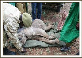 Emaciated, her skin was hanging from her bones.jpg