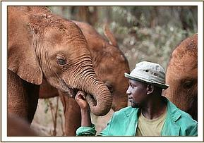 Turkwel settled in the Nairobi nursery