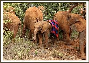 Godoma out in the bush with the other orphans