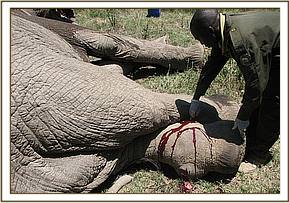 treating the elephant's wounds