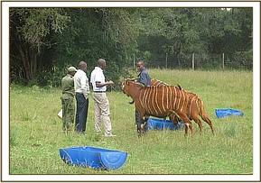 Assessing the overall condition of the Bongo's