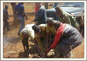 Four men was enough to pull the kudu out