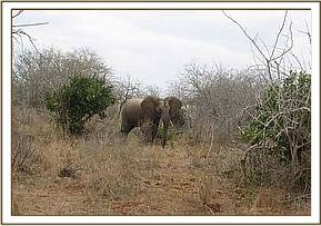 The elephant was found in Kasigau