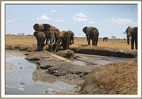 The stuck elephant and members of its herd