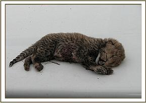 One of the dead cubs