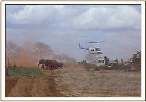 The elephants are driven out of the Ngulia Rhino Sanctuary