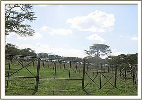 A boma is erected for medical care
