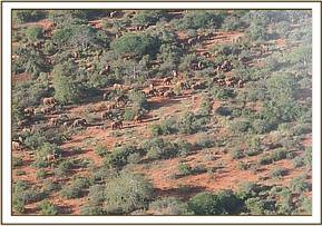 A herd of elephants sighted during the census
