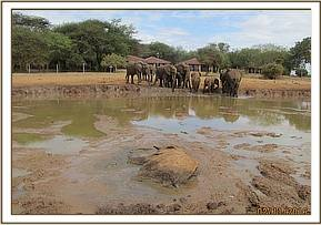 The elephant is half submerged in the mud