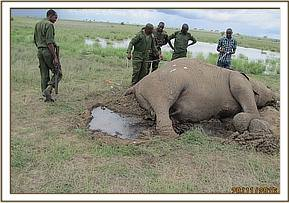 EXAMINATION ELEPHANT CARCASS NEAR SATAO