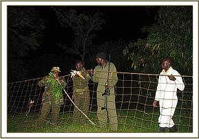 Setting up the net used to capture the bush pigs