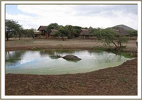 The hippo in the water pond at Kitani Severin Camp.jpg