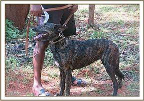 The sick canine was reported by Ngulia Rhino Sanctuary Officer