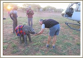 The calf was collected the following morning by DSWT Helicopter