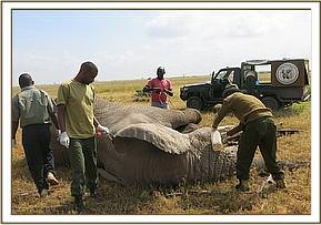 Preparing to examine the elephant