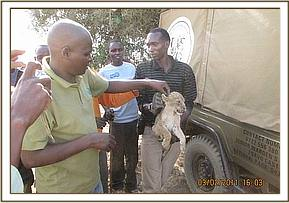 One of the rescued lion cubs