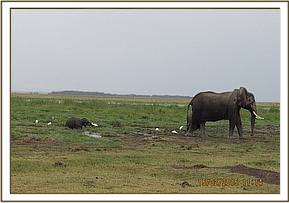 Mother and baby elephant at the marsh