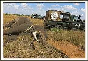 Flipping the Elephant with two Land Cruisers