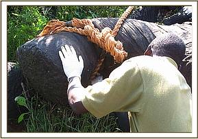 Treatment of the eles leg
